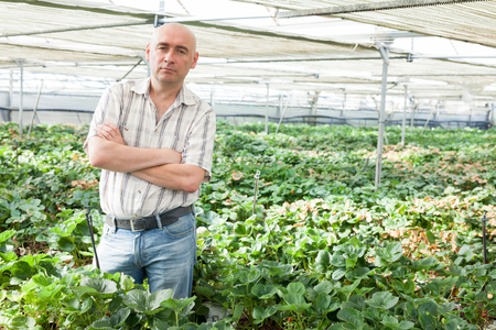 Portrait of confident owner of greenhouse standing near growing vegetables