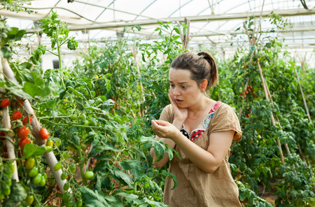 Portrait of positive female farmer engaged in cultivation of plants in hothouse Stock Photo