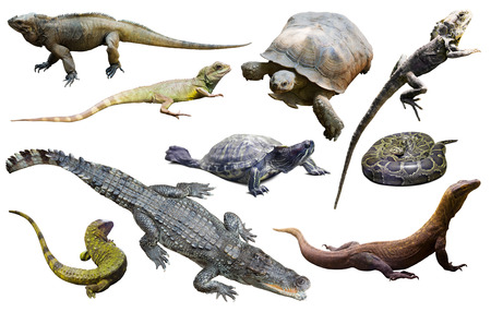 assortment of different reptiles isolated on white background Imagens