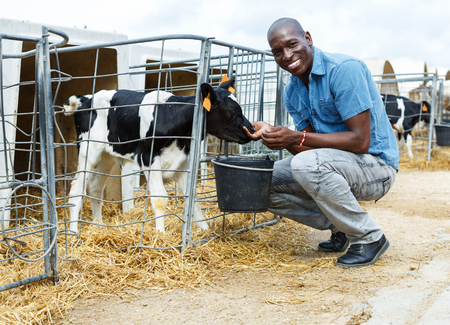 Confident man feeding calves while working of dairy farm outdoors
