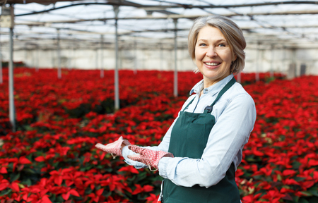 Happy middle-aged female standing in her greenhouse on background with red plantation of Poinsettia pulcherrima
