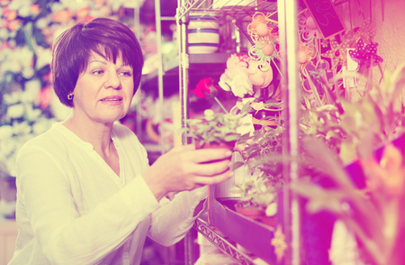 Satisfied pleasant  female customer choosing best begonia to buy in flower shop
