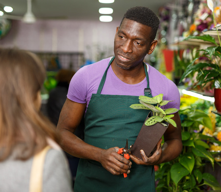 Portrait of smiling African American man florist working in floral shop, consulting female client about potted houseplant