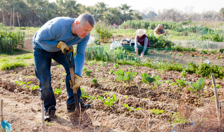 Man  professional gardener using garden shovel at  land  in garden outdoor