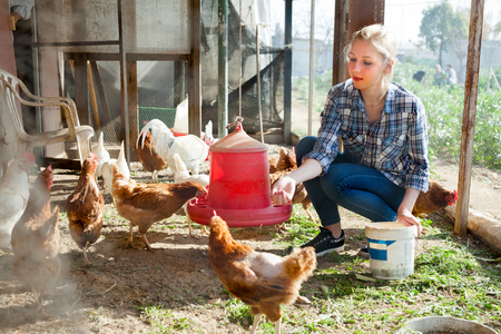 Young woman farmer caring for poultry Stock fotó