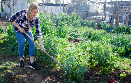 Young woman weeds with a hoe the garden bed