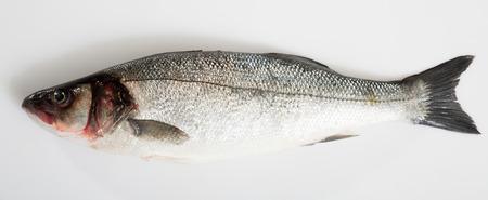 Raw European bass fish on white background