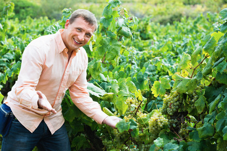 Young cheerful diligent smiling vintner checking wine grape and leaves in summer day Stock Photo