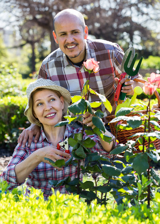 Elderly smiling couple engaged in gardening in the backyard garden Archivio Fotografico