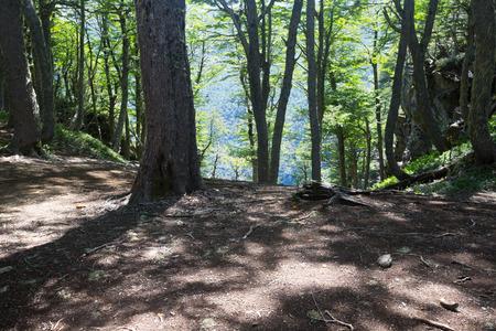 Gesamtansicht auf Waldlichtungen mit hohen Bäumen und Sträuchern im Sommer