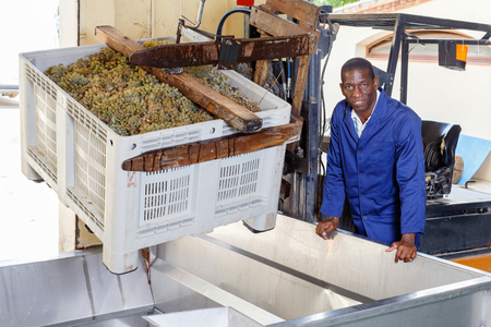African American glad  positive smiling male worker controlling process of unloading grapes with forklift
