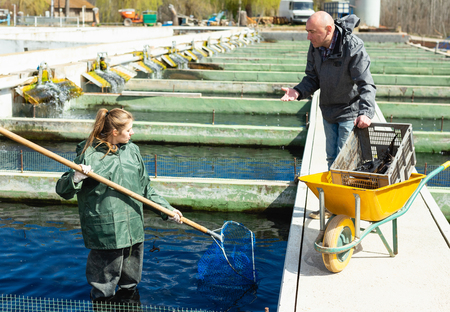 Male and female fish farm workers catching sturgeon at pools