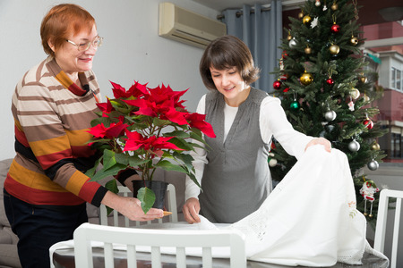 Senior woman with adult daughter in festive mood spreading tablecloth on table to decorate home with blooming poinsettia Imagens