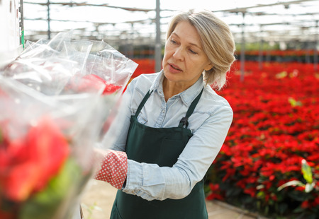 Mature woman florist checking plants packed in transparent film prepared for sale in hothouse