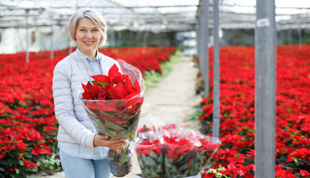 Portrait of smiling middle-aged woman with bought in greenhouse flowering red Poinsettias Stock Photo