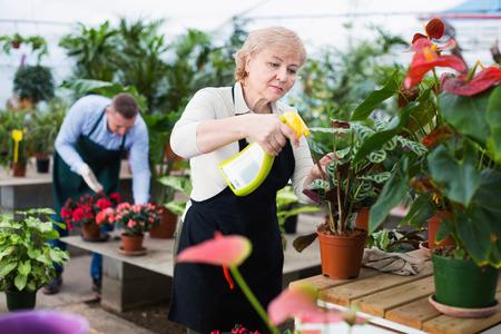 Zwei fleißige ernsthafte Gärtner verarbeiten Blumen mit Substanzen im Gewächshaus.