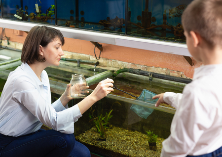 Friendly pet shop saleswoman looking and catching fish in tank for little customer