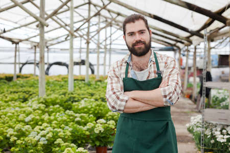 Portrait of confident young florist on plantation of blooming hydrangea in greenhouse Фото со стока