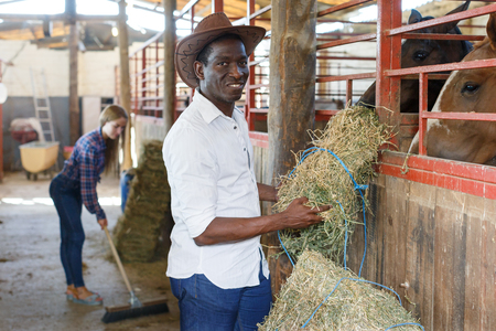 Two farm workers afro man and European girl spreading hay at stable