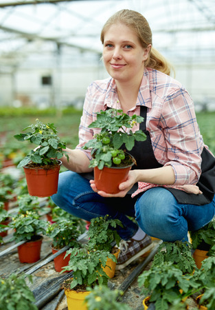 Woman gardener working with tomato seedlings in greenhouse