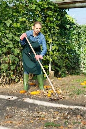 Experienced woman farmer gardening in sunny glasshouse