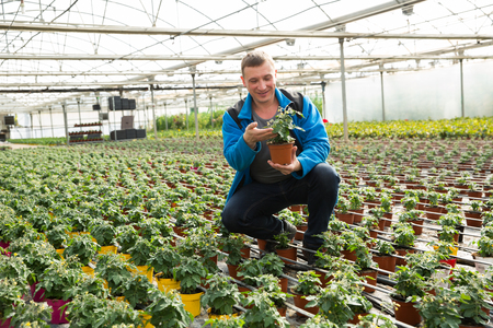 Experienced male worker checking tomato seedlings while gardening in glasshouse Reklamní fotografie