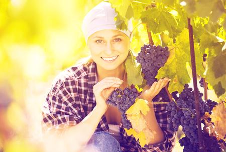 Jeune femme heureuse récolte des raisins mûrs dans une ferme et souriante Banque d'images