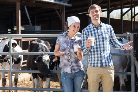 Young cheerful male and female standing with in the cow hangar and showing fresh milk Imagens