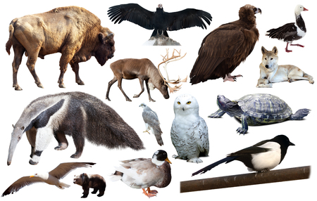 collection of different birds and mammals from north america isolated on white background Stock Photo