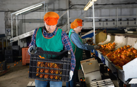 Positive cheerful male employee in colored uniform carrying plastic box with fresh ripe mandarins selected on sorting line