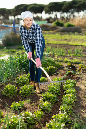 Slender female gardener with rake Standard-Bild