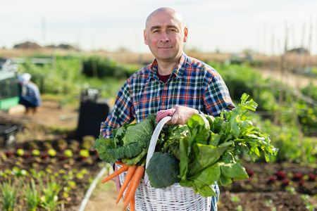 Man farmer with a basket of vegetables in the garden Stok Fotoğraf