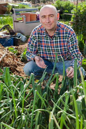 Smiling man engaged in cultivation of organic vegetables, checking plants