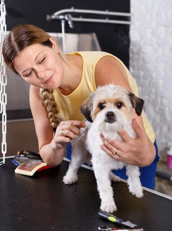 Female groomer performing fur care for havanese puppy at grooming salon