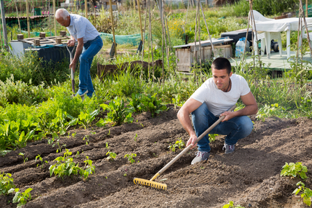 Young  male horticulturist with rake  cultivate land in garden, man on background