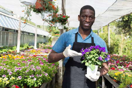 smiling African American man florist working in sunny greenhouse full of flowers