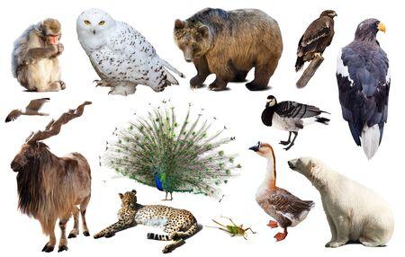 Sammlung von verschiedenen Vögeln, Säugetieren und Reptilien aus Asien isoliert auf weißem Hintergrund Standard-Bild
