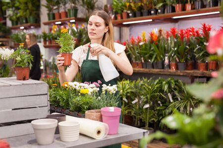 Female florist working in a flower store, making houseplants ready for the customer