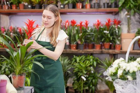 Experienced female florist inspecting potted plants in his floral shop