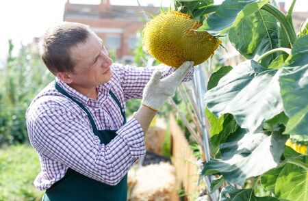 Portrait of man horticulturist working with sunflower in sunny garden outdoor