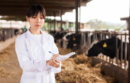 Female employee in white gown working with cows at cowhouse