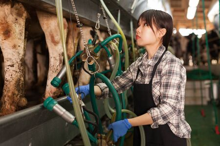 Milkmaid in apron in barn with automatical cow milking machines