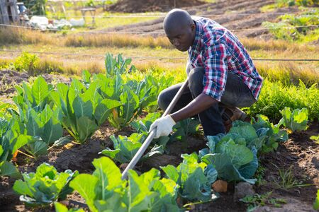 Young positive African American man working with plants in vegetable garden Stok Fotoğraf