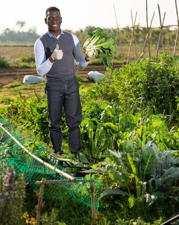 Portrait of happy African-American man giving thumbs up, satisfied with harvest of Swiss chard cultivated at his smallholding Stock Photo
