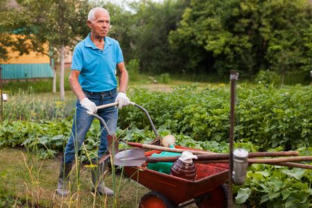 Elderly gray-haired man working in the garden Stok Fotoğraf