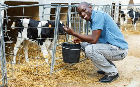 Confident man worker feeding calves while working of dairy farm outdoors