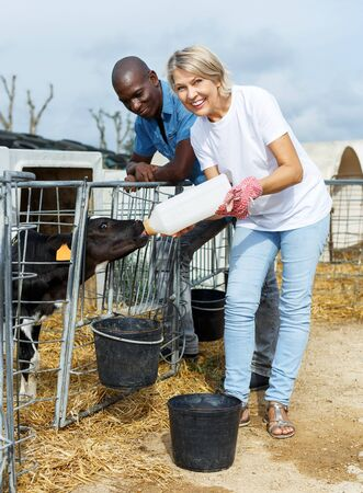 Confident male and female farmers feeding calves in outdoors stail