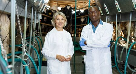 Two farm milkmaids male and female  standing near modern cow milking machines at farm
