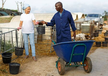 Contadino con carretto e contadina che lavorano insieme all'allevamento di mucche all'aperto Archivio Fotografico