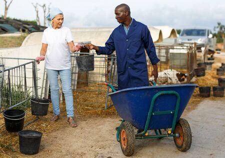 Granjero de hombre con carro y granjero de mujer trabajando juntos en la granja de vacas al aire libre Foto de archivo